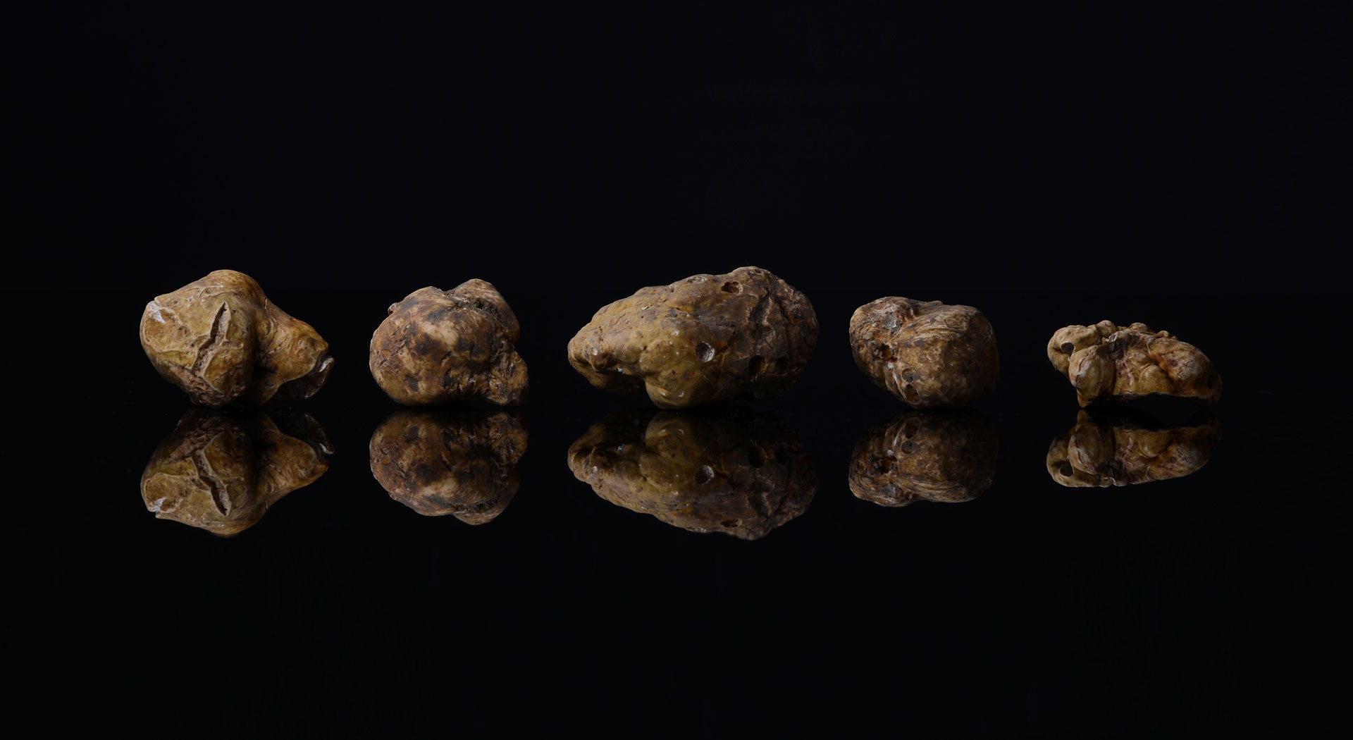 crni tartuf - prodan tartufi